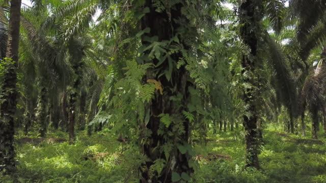Jungle forest shot