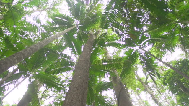 vídeos de stock, filmes e b-roll de jungle forest trees shot - arbusto tropical