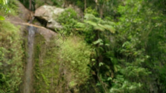 jungle in thailand - insel ko samui stock-videos und b-roll-filmmaterial