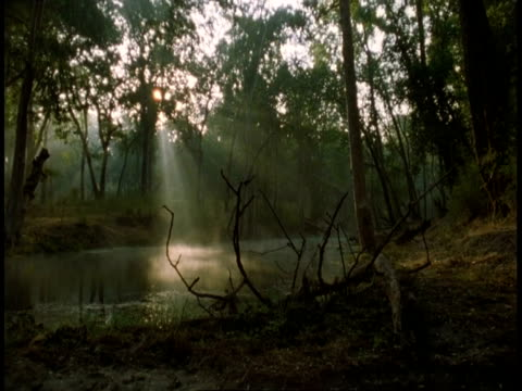 wa jungle lake with light streaming in, bandhavgarh national park, india - national icon stock videos & royalty-free footage