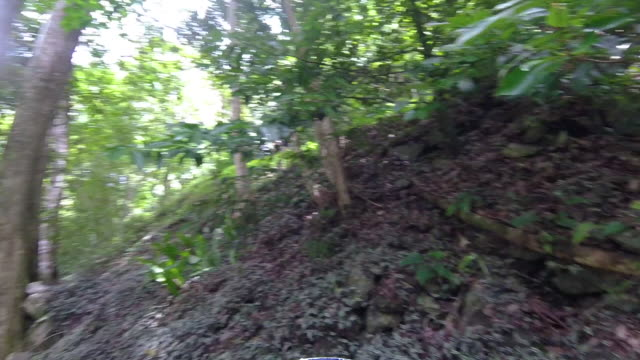 vídeos de stock, filmes e b-roll de jungle leaves and forest trees - arbusto tropical