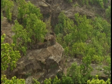 wa jungle scenic, bandhavgarh national park, india - national icon stock videos & royalty-free footage