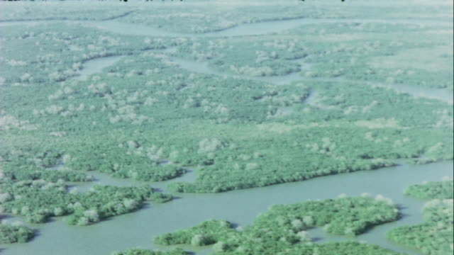jungle swampland the forest of assassins and the long tau shipping channel in the delta / vietnam - 1966 stock-videos und b-roll-filmmaterial
