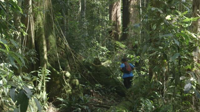 vídeos y material grabado en eventos de stock de ms jungle to butress roots and man walking / bukit lawang, north sumatra, indonesia - un solo hombre