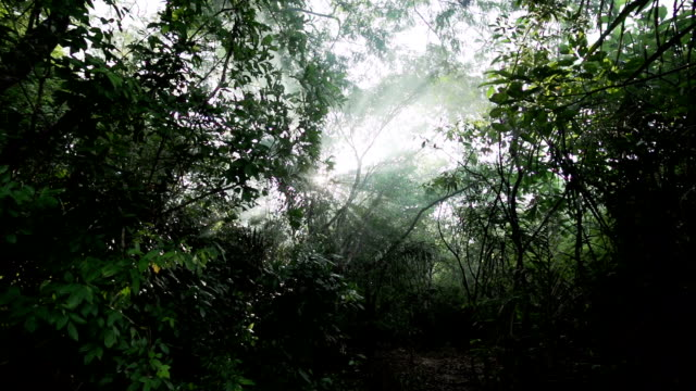 jungle trees with sun flare