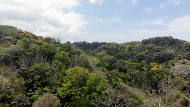 jungle - puntarenas province stock videos & royalty-free footage
