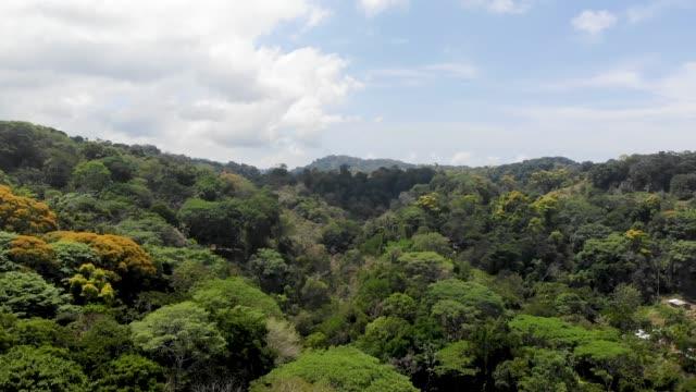 vídeos y material grabado en eventos de stock de selva - perfección
