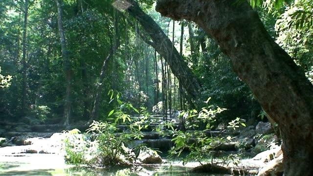 vídeos y material grabado en eventos de stock de música jungle - árbol tropical