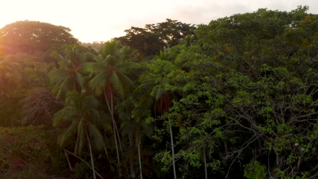 jungle - costa rica video stock e b–roll
