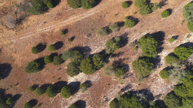 vídeos de stock e filmes b-roll de juniper forest in the arid highland in texas, usa. aerial drone video with the panning camera motion, following the trail. - sudoeste dos estados unidos