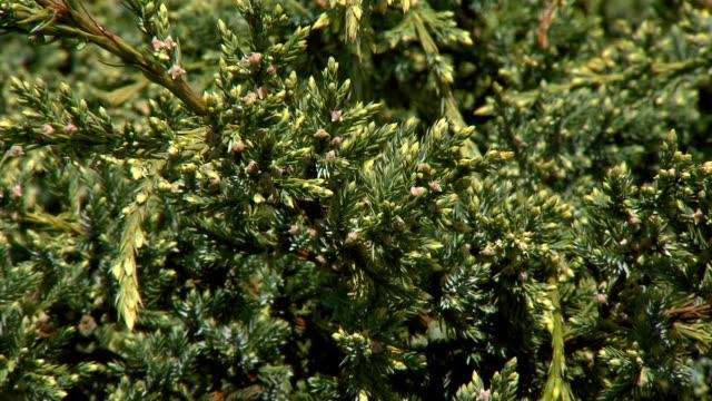 juniper - spine stock videos & royalty-free footage