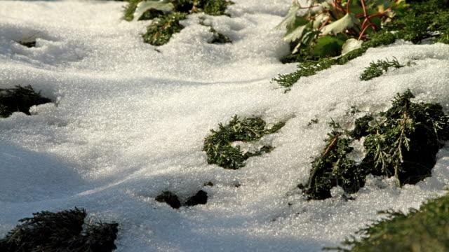 junipers sich während der schnee schmelzen - nadel pflanzenbestandteile stock-videos und b-roll-filmmaterial