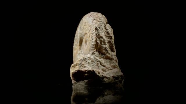 jurassic ammonite on black - jurassic stock videos & royalty-free footage