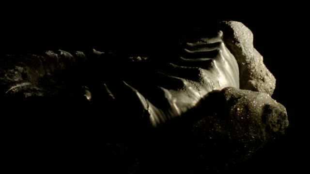 jurassic ammonite turning on black - origins stock videos and b-roll footage
