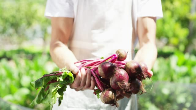 just a handful of radish - dieting stock videos & royalty-free footage