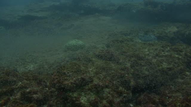 juvenile fish - plankton stock videos & royalty-free footage
