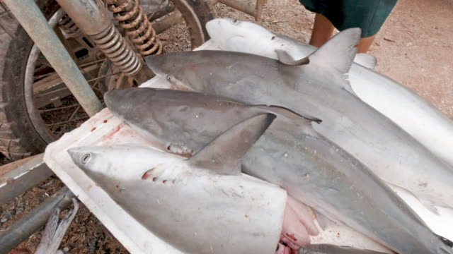 juvenille blacktip reef sharks for sale in fish market thailand - decapitated stock videos & royalty-free footage