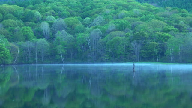 kagami-ike(mirror pond), nagano, japan - lush video stock e b–roll