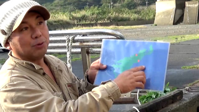amami kagoshima prefecturesightseers were overwhelmed by the sight of giant whales from upclose during a cruise tour off amamioshima island here... - aquatic mammal stock videos & royalty-free footage