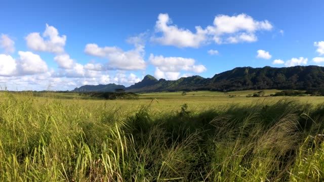 kahili mountain park, kauai - zona erbosa video stock e b–roll