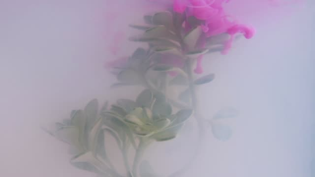 kaleidoscope of plant with ink in water - magenta stock videos & royalty-free footage