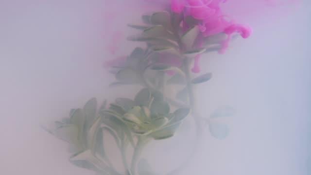 Kaléidoscope de plante avec de l'encre dans l'eau