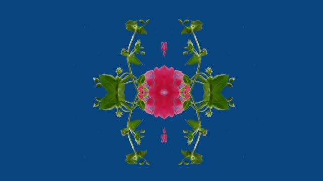 kaleidoscope of plant with ink in water - kaleidoscope pattern stock videos & royalty-free footage