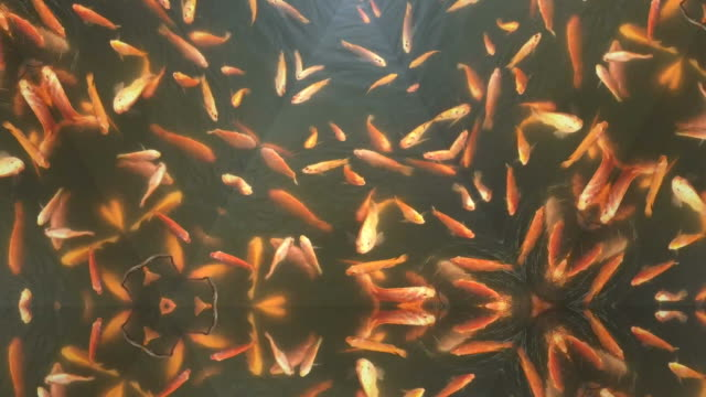 Kaleidoscopic abstract pattern background fish swimming in water