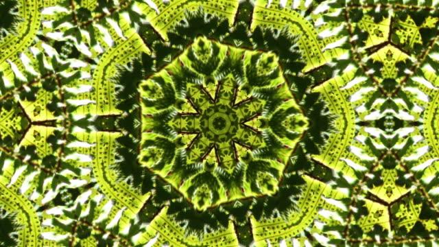 vídeos de stock, filmes e b-roll de kaleidoscopic fern leaves. - estampa de folha