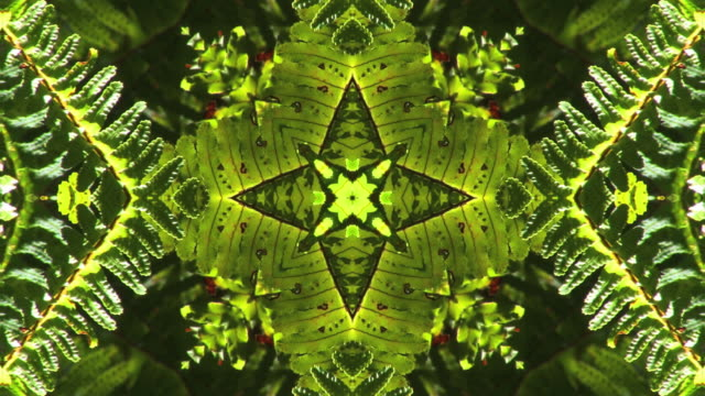 kaleidoscopic ferns. - digital enhancement stock videos & royalty-free footage