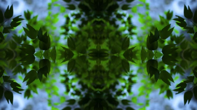 vidéos et rushes de kaleidoscopic mandala of green leaves - colour image
