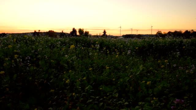 Kamera Flowerfield の前に追跡
