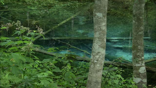 kaminoko pond, lakes and marshes, kiyosato-cho akan national park hokkaido - 自然美点の映像素材/bロール