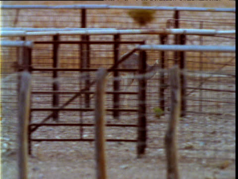 Kangaroo jumps over fence on ranch, South Australia