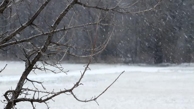 kansas snow fall hd1080 - kansas stock videos & royalty-free footage