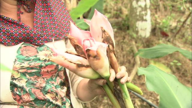 vídeos de stock e filmes b-roll de kantan vegetables of the village of kiau nulu in malaysia - ramo parte de uma planta