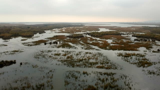 karacabey floodplain longoz forest, bursa, turkey - lagoon stock videos & royalty-free footage