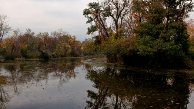 vídeos y material grabado en eventos de stock de karacabey floodplain longoz bosque, bursa, turquía - the nature conservancy