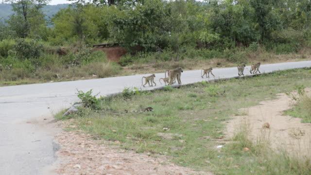 kariba dam - small group of animals stock videos & royalty-free footage