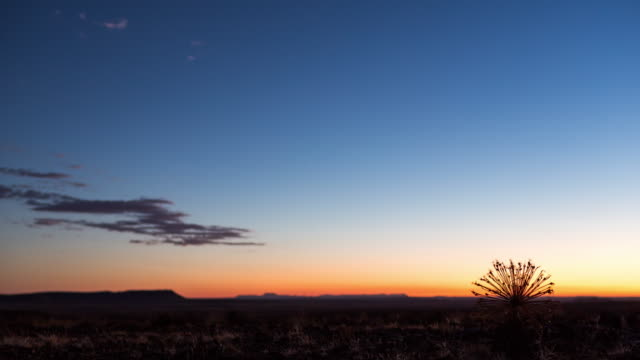 a karoo landscape with a silhouetted dried out bushman poison plant at sunset - karoo video stock e b–roll