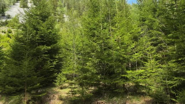 モミの木を持つカルストマウンテン - 堆積岩点の映像素材/bロール