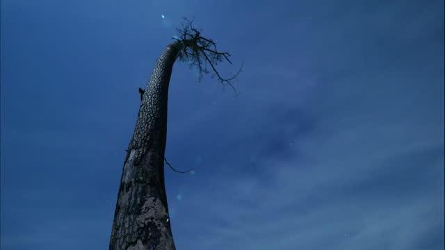 time-lapse, kashima's lone pine tree, fukushima, japan - rebuilding stock videos & royalty-free footage