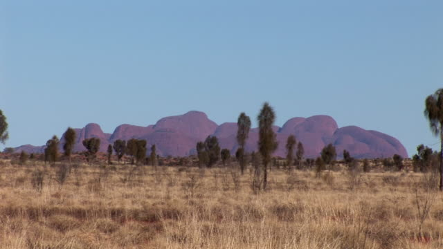 ws kata tjuta with vegetation in foreground, uluru-kata tjuta national park, northern territory, australia - エアーズロック点の映像素材/bロール