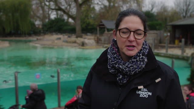 kathryn england, chief operating officer at zsl london zoo on inviting potential visitors to come to the zoo stress how covid safe it is at zsl... - idyllic stock videos & royalty-free footage