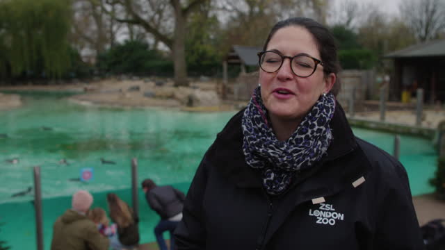kathryn england chief operating officer at zsl london zoo, talks about visits from father christmas around the zoo this december as things reopens at... - ethereal stock videos & royalty-free footage