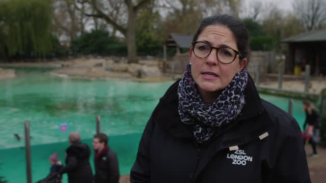 kathryn england, chief operating officer on how difficult the year has been with the lockdowns at zsl london zoo on december 2, 2020 in london,... - ethereal stock videos & royalty-free footage