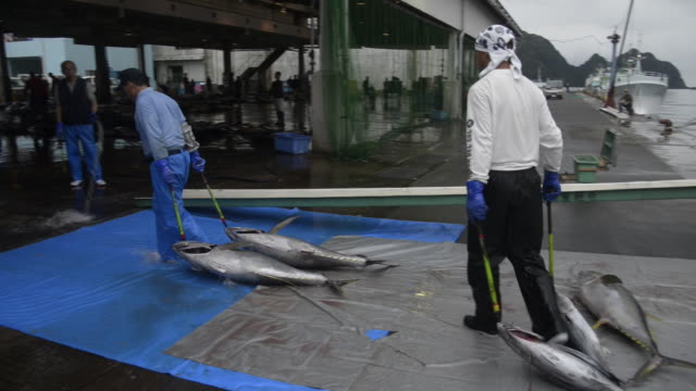 katsuura fish market - tuna seafood stock videos and b-roll footage