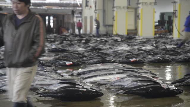 katsuura fish market - tuna seafood stock videos & royalty-free footage