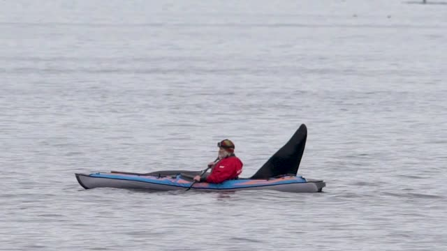 a kayaker gets totally surprised when a massive orca male swims mere inches from him in what could have been a deadly encounter filmed in the arctic... - schwertwal stock-videos und b-roll-filmmaterial