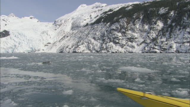a kayaker paddles backwards through the icy waters of prince william sound. - prince william stock videos & royalty-free footage